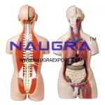 Human Anatomy Chart