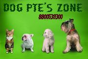 Good looking black tibaten mastiff Puppies for Sale at dogpetszone