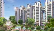 3 BHK Flats For Rent Uni world City Sector 31 Cont,  9811280160