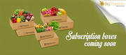 Subscription Boxes Online