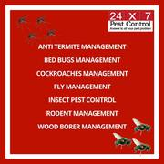 Professional Pest Control Services Delhi
