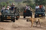 The Grand Golden Ranthambore With Couple.