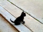 Black Cat for sale